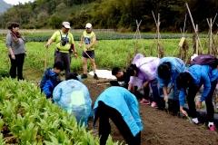 学习种植蔬菜-吕建伟摄