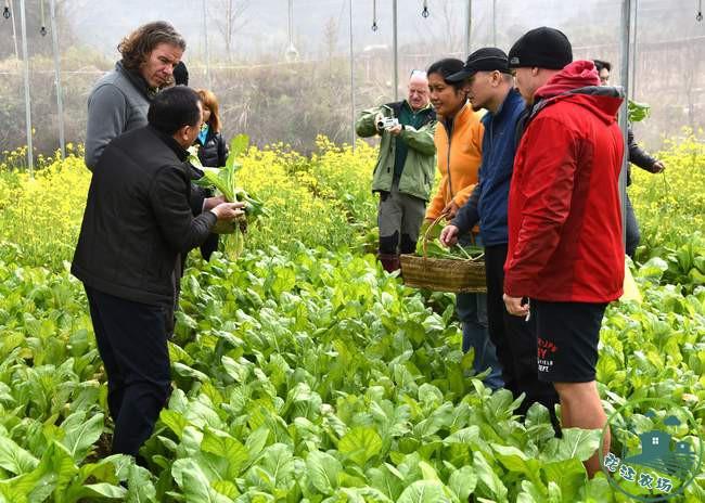 中方专家在介绍农场的有机蔬菜生产情况-吕建伟摄
